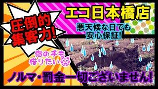 猫の手も借りたいほど!忙しい☆エコ日本橋