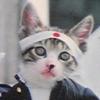 猫師匠_写真