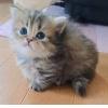 ネコ好き店長_写真