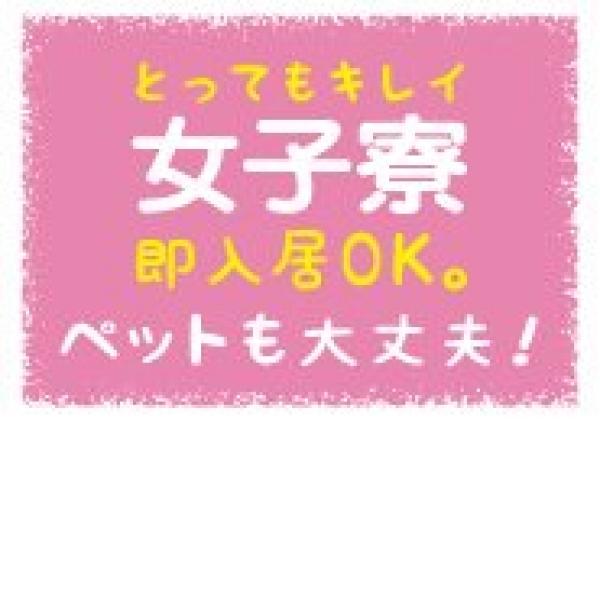 神戸 M-Dolls_店舗イメージ写真2