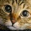 猫好き店長_写真